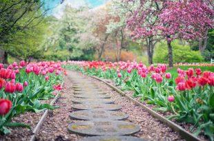 embellir-jardin